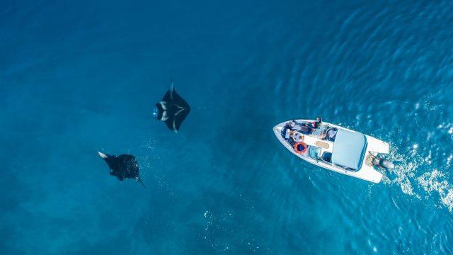 Avistamiento cetáceos en Islas Maldivas