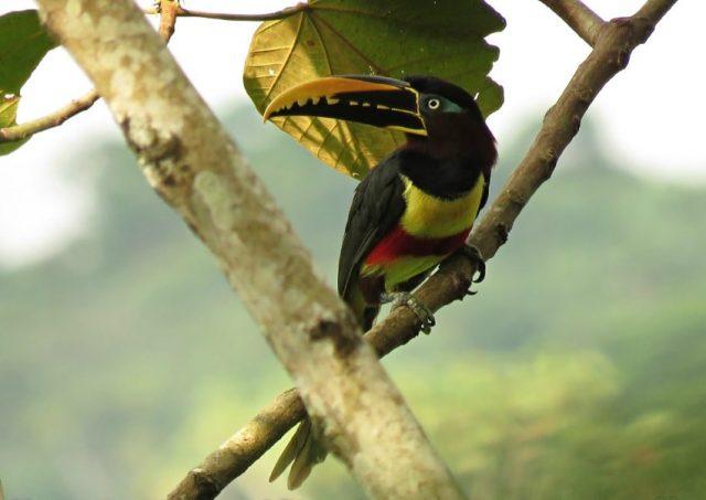 Avistamiento Aves Colombia Biodiversidad Naturaleza-min