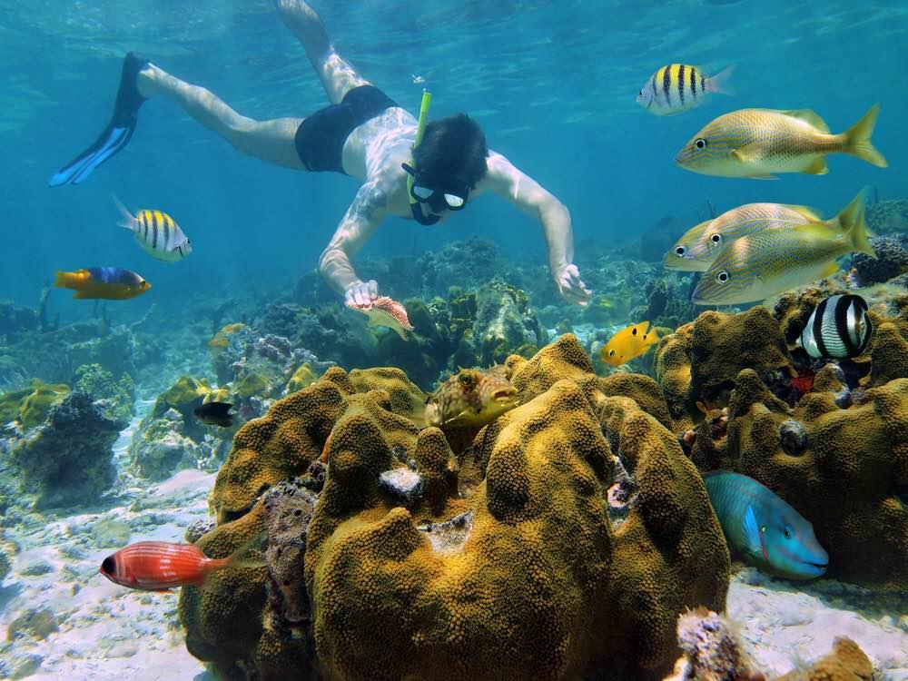 Buceo_Snorkel_Cozumel_Playa_Del_Carmen_Cancun_Mexico