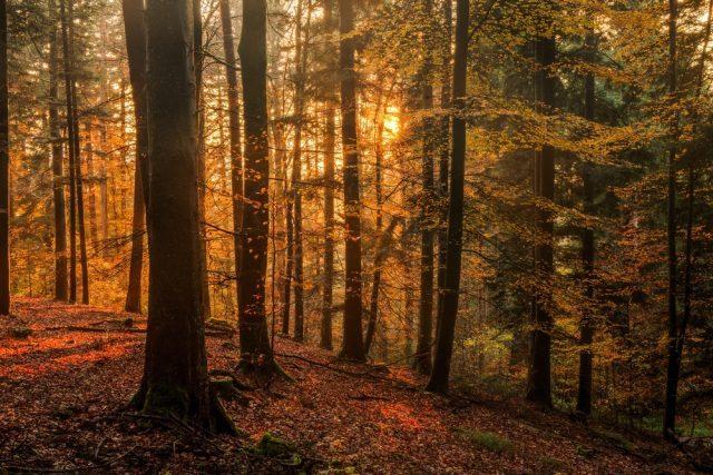 Europa paisajes turismo otoño Alemania Selva Negra Shutterstock Andreas Zerndl