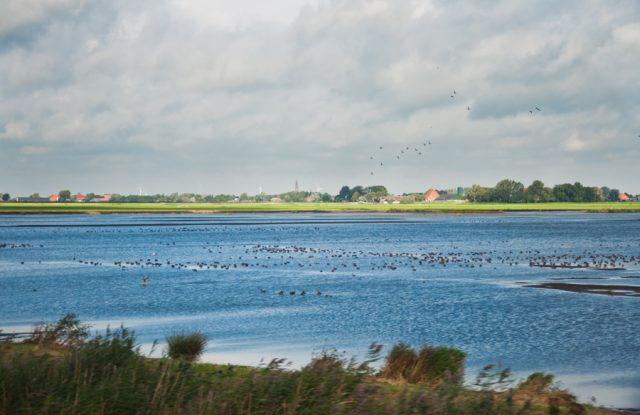 Frisia Holanda Dani Keral Un Viaje Creativo