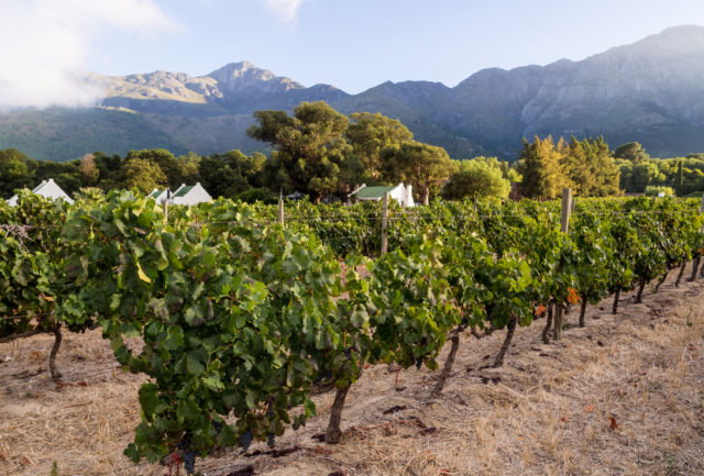 Ruta-vino-Franschhoek-Sudafrica-Magdalena Paluchowska-Shutterstock