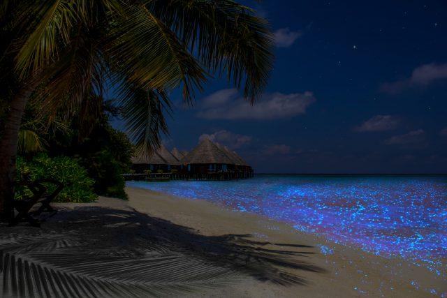 Bioluminiscencia Islas Maldivas