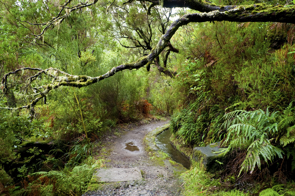 Portugal Madeira ecotourism laurel forest reserve kukuruxa shutterstock_51648061