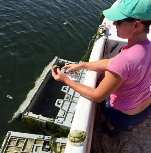 L2F Aug 15 pic USA Maine New England Portland Scarborough Nonesuch Oyster Farm DPA