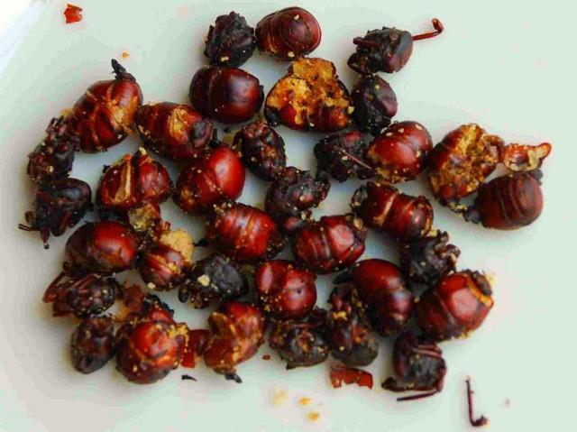 international food unusual Colombia hormiga culonas ants Sascha Grabow Wikipedia Flickr