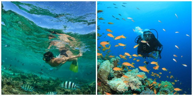 L2F Sep 15 pic multinational snorkeling diving collage