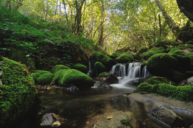 Spain Asturias Muniellos ecotourism reserve Javier Perez Wikipedia