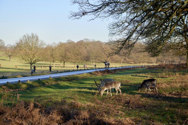 Britain England London parks Richmond Park Nando Machado shutterstock_240895507