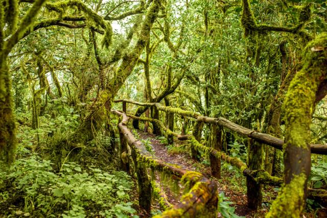 Spain Canary Islands La Gomera Garajonay Park laurels RossHelen shutterstock_381203101