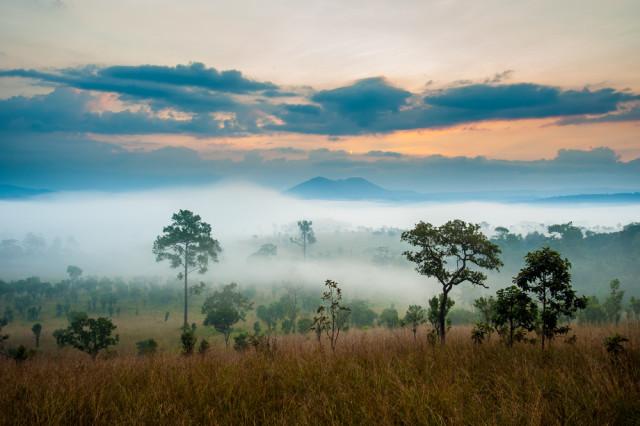 South Africa Kruger National Park savannah meadow sunrise Joney shutterstock