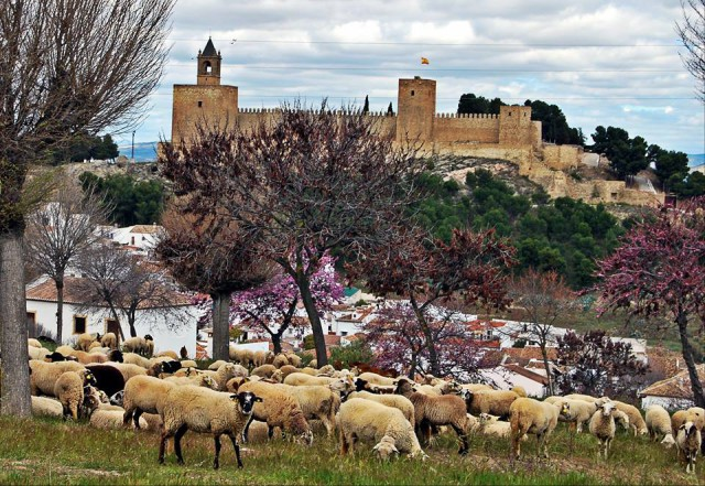 Spain Andalusia Camino Mozarabe sheep and castle