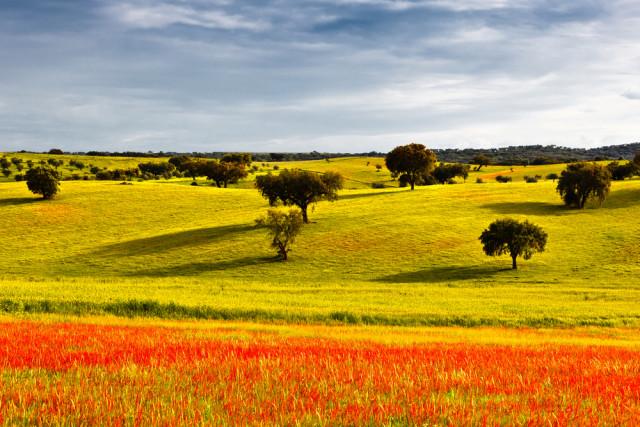 Portugal Alentejo spring landscape Carpeira shutterstock_105769898