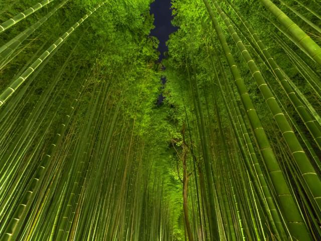 asia-japan-kyoto-arashiyama-sagano-bamboo-forest-night-ryusuke-komori-shutterstock_216490816