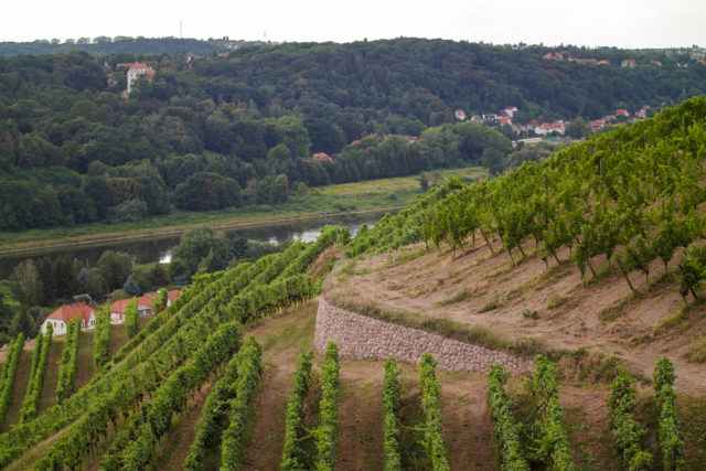 l2f-oct-16-pic-germany-saxony-meissen-vineyard-scimmery-shutterstock_471387707