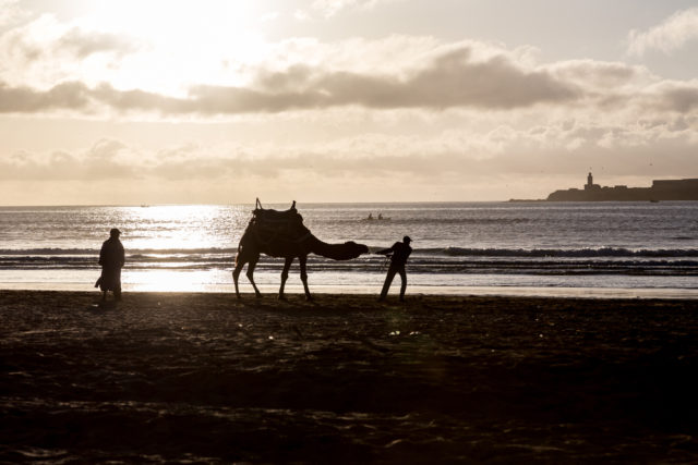 l2f-dec-16-pic-morocco-essaouira-beach-sunset-camel-dominika-zarzycka-shutterstock_517175905