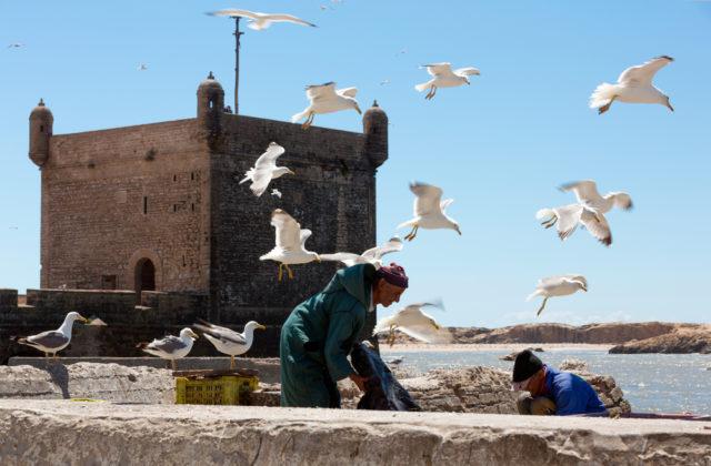 l2f-dec-16-pic-morocco-essaouira-fishermen-citadel-posztos-shutterstock_148847120