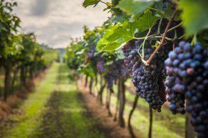 Wines Navalcarnero Designation Origin Madrid Spain Lukasz-Szwaj-Shutterstock