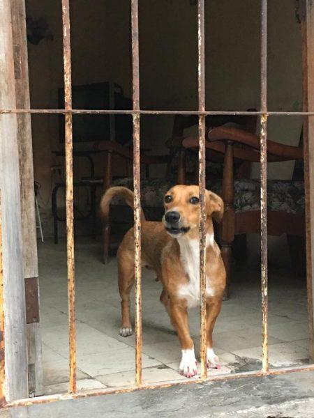 L2F Jun 17 pic Cuba Havana behind bars