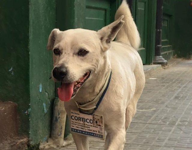 L2F Jun 17 pic Cuba Havana street dogs Cortico