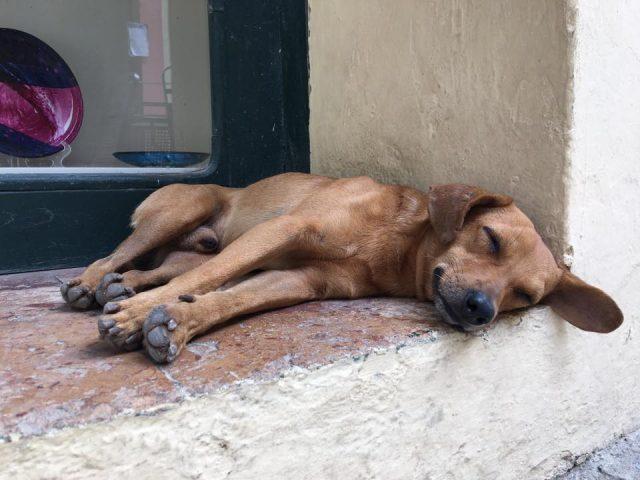 L2F Jun 17 pic Cuba Havana street dogs sleeping on windowsill