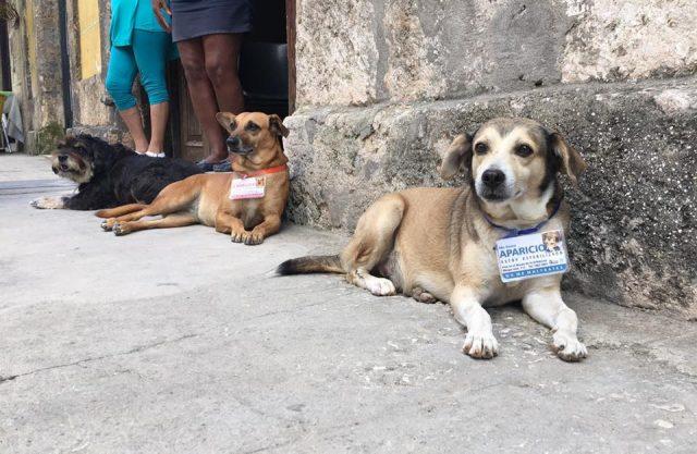 L2F June 17 pic Cuba street dogs Canelita Aparicio Vladimir