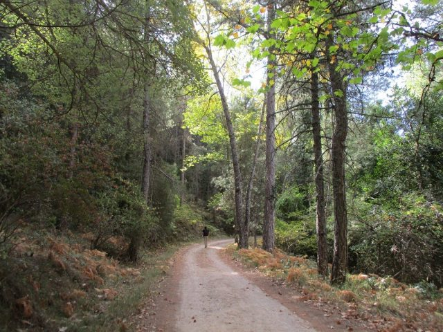 L2F Jan 18 pic Spain Andalusia Jaén Cazorla forest hiking path