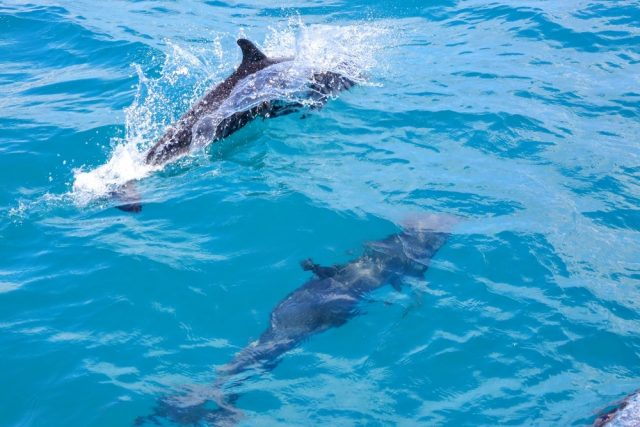 L2F May 18 pic Costa Rica Osa Drake Bay bottlenose dolphins shutterstock_692861419