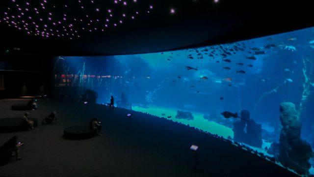L2F Aug 18 Spain Canary Islands Gran Canaria Santa Cruz Poema del Mar aquarium flickr El Coleccionista de instantes