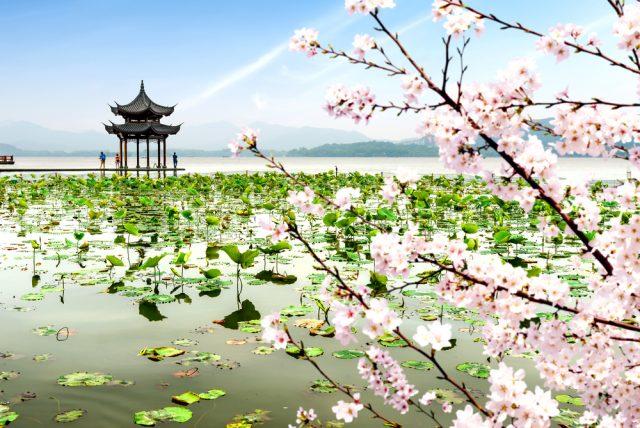 L2F Sep 18 pic China Hangzhou West Lake pagoda lotuses plum blossoms shutterstock_482548453