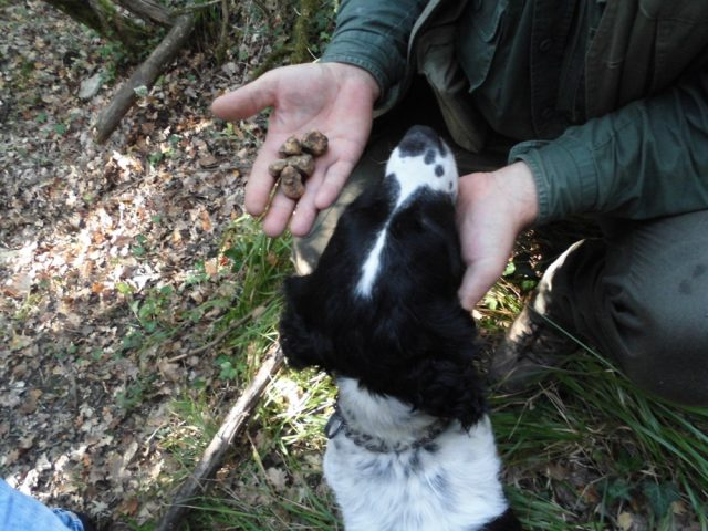 L2F Nov 18 pic Italy Tuscany Borgo Pignano truffle dog