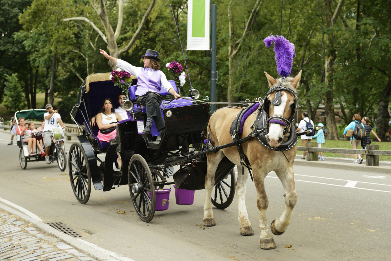 """""""New York City, United States - July 21, 2012: In Manhattan's Central Park, guides driving tourists through on both horse drawn buggy and a bicycle peddled cart point at different sites."""""""