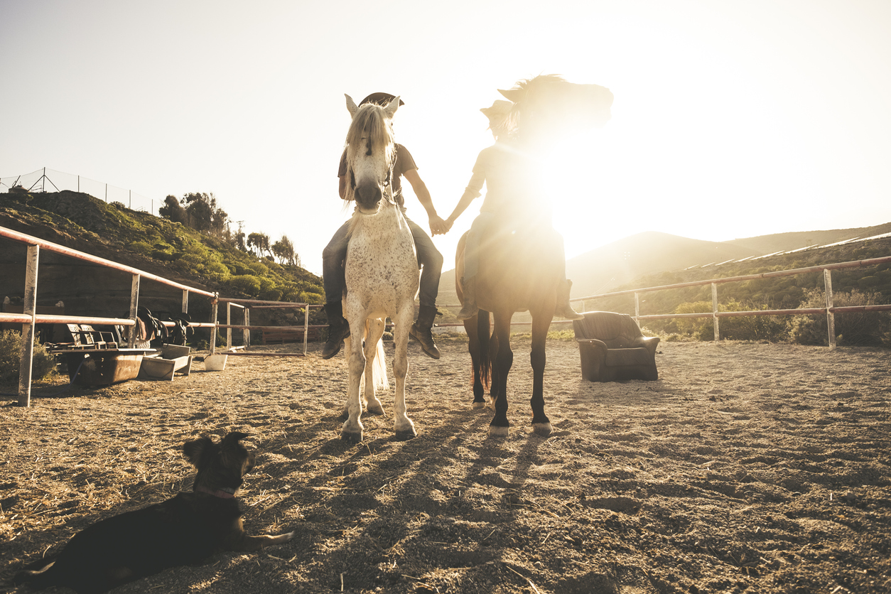 horse riding scenic picture with two animal and people couple and a dog taking hands with love and friendship and sunset sunlight in the background. warm relationship concept image