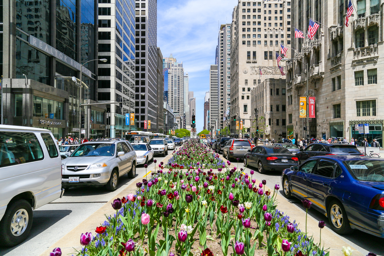 Chicago, USA - May 24, 2014: The Magnificent Mile with lots of tulips planted in the median and cars passing by.