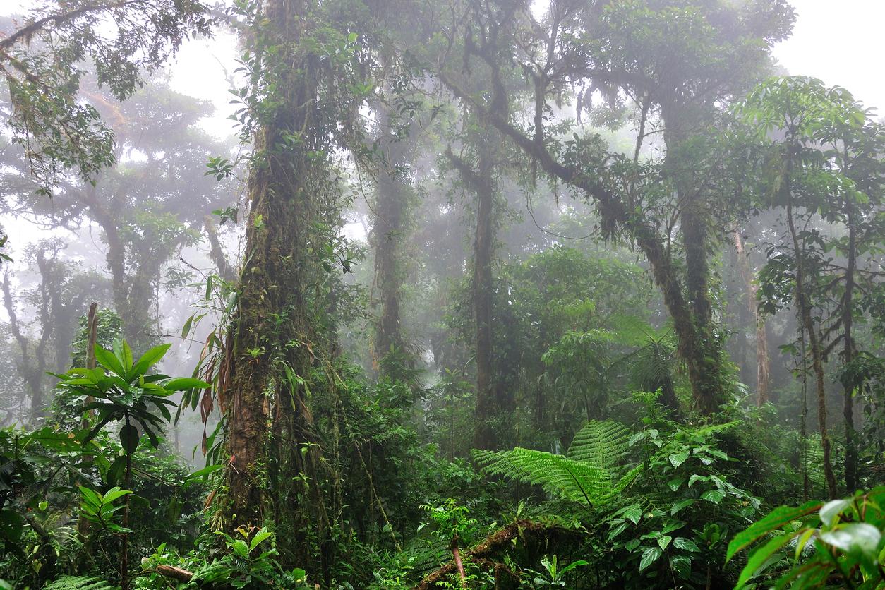 So präsentierte sich uns der Nebelwald in Costa Rica