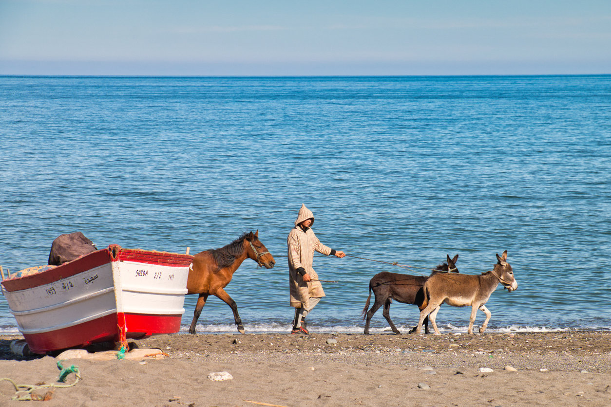 Oued Laou, Chefchaouen, Morocco - November 3, 2018: A young man in traditional Moroccan attire walks his donkeys on the beach of Oued Laou, a small town on the coast of the Mediterranean Sea. Morocco