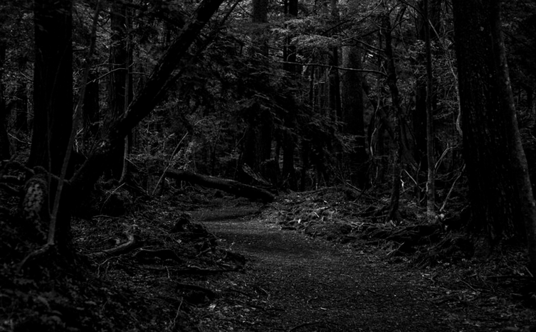 L2F Oct 19 pic Japan supernatural Halloween Aokigahara Forest flickr