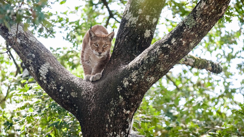 animal in danger of extinction