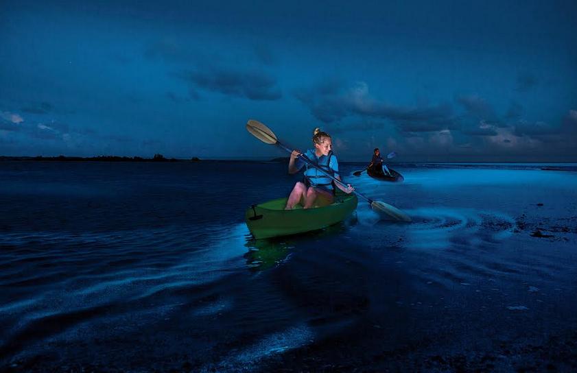 L2F Dec 19 pic Puerto Rico Vieques Puerto Mosquito bioluminescent bay