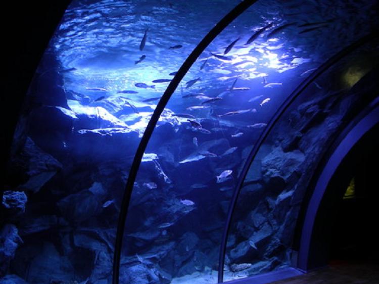 TBP pic Europe Italy Milan Aquarium Wikipedia