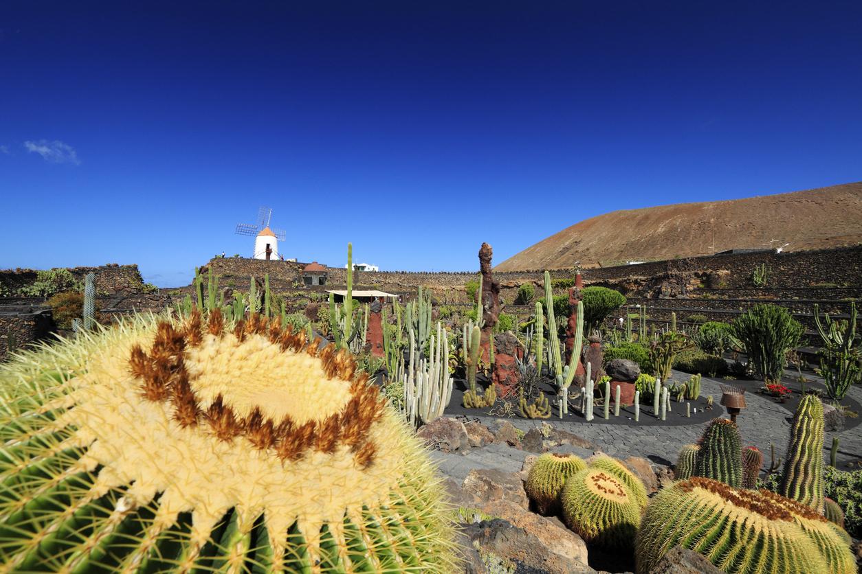 Jardin de Cactus, the last work of Cesar Manrique, in Lanzarote (Canary Islands of Spain).