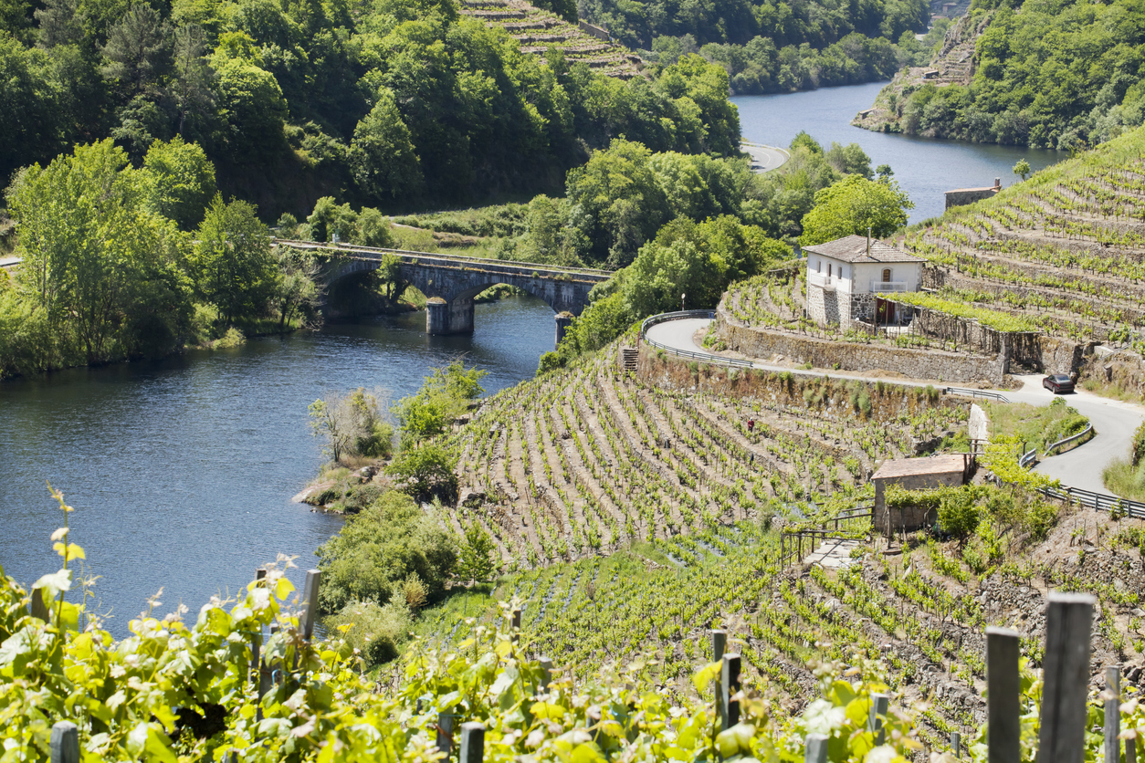 """""""Ribeira sacra vine growing area in Galicia, Spain, in the banks of river MiAo."""""""