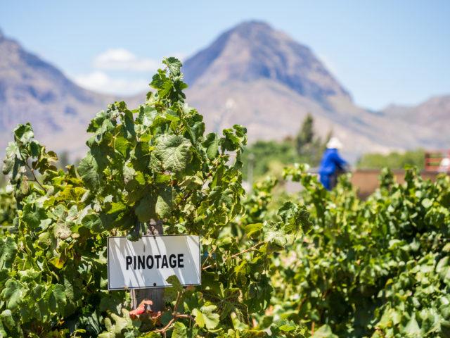 Rua-vino-Sudafrica-Pinotage-Franschhoek-Magdalena Paluchowska-Shutterstock